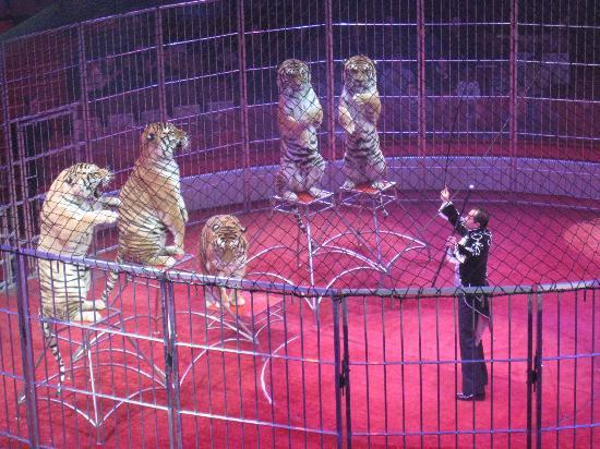 Zirkus 2014